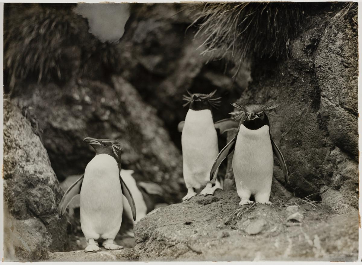 Antarctica_1911_fotograf_Frank_Hurley_39