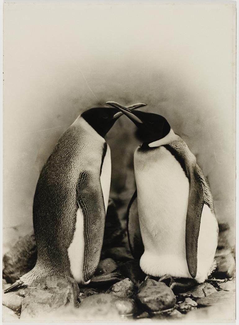 Antarctica_1911_fotograf_Frank_Hurley_40