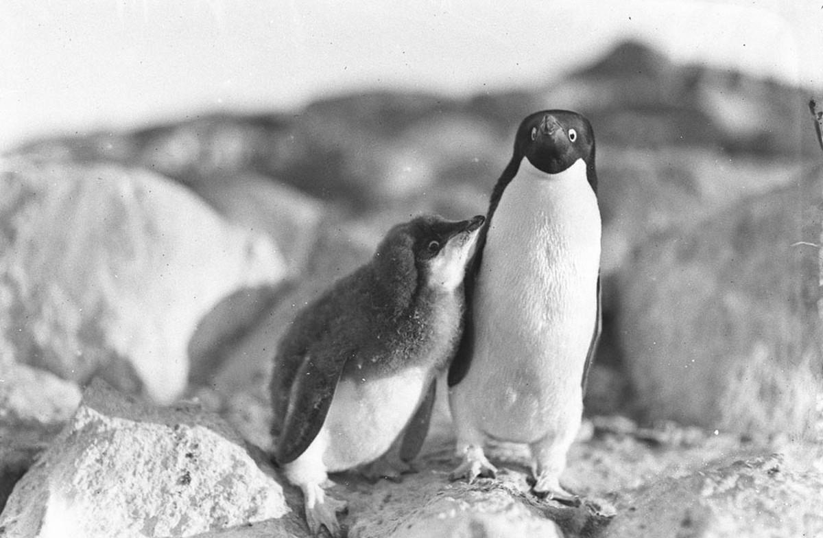 Antarctica_1911_fotograf_Frank_Hurley_44