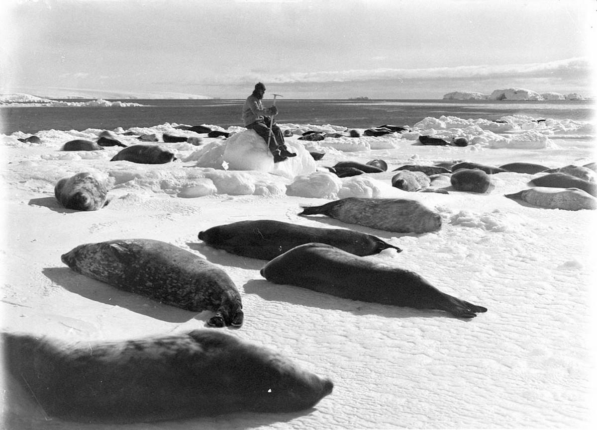 Antarctica_1911_fotograf_Frank_Hurley_46