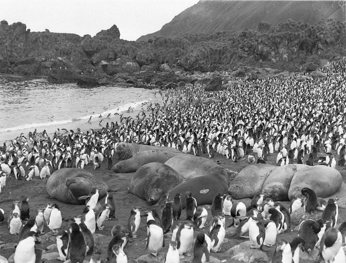 Antarctica_1911_fotograf_Frank_Hurley_47