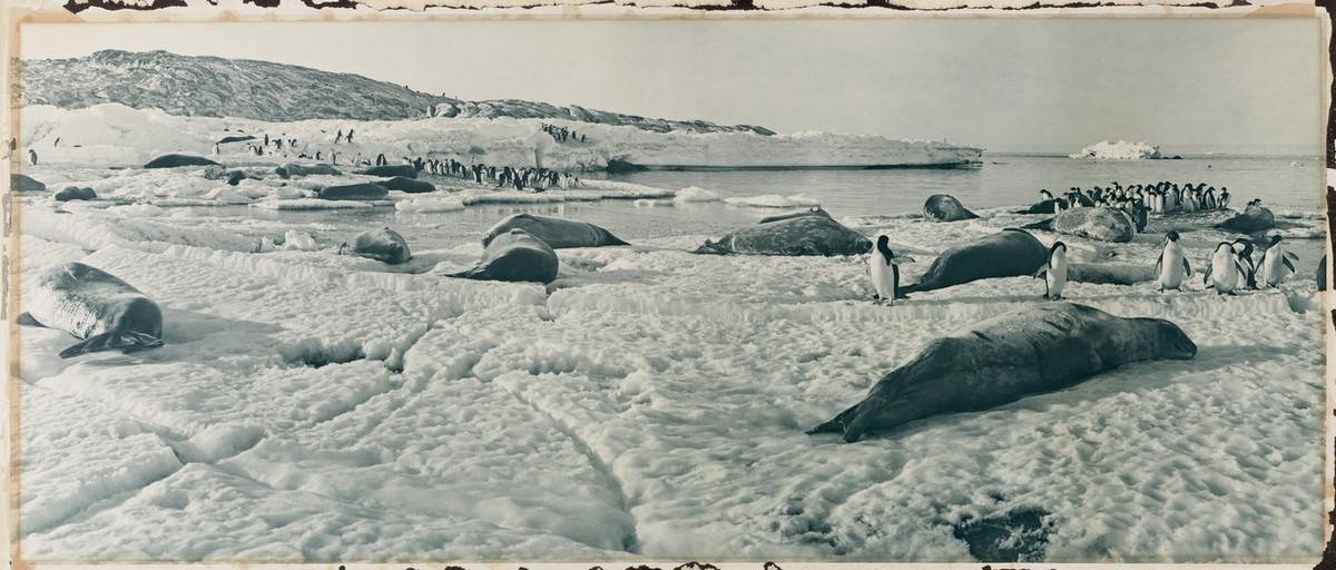 Antarctica_1911_fotograf_Frank_Hurley_5