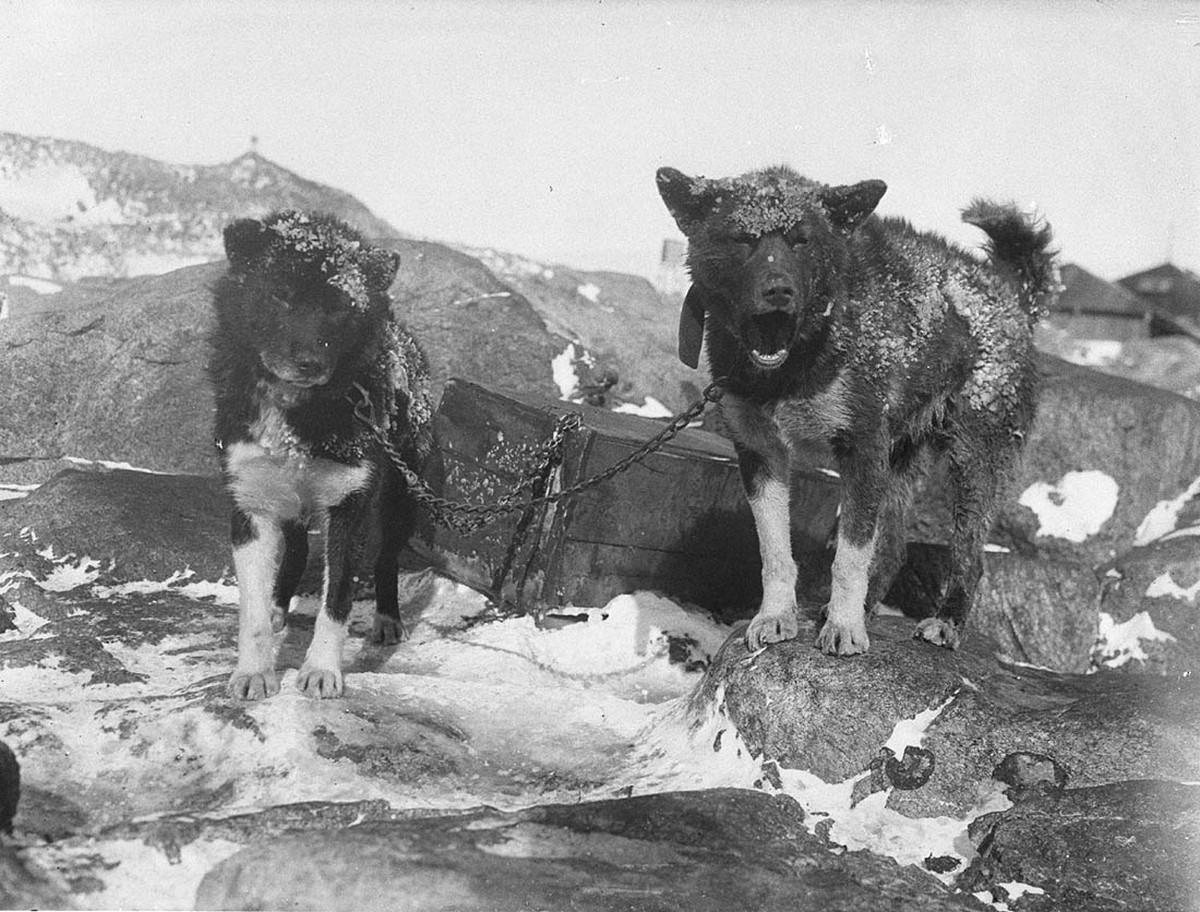 Antarctica_1911_fotograf_Frank_Hurley_53
