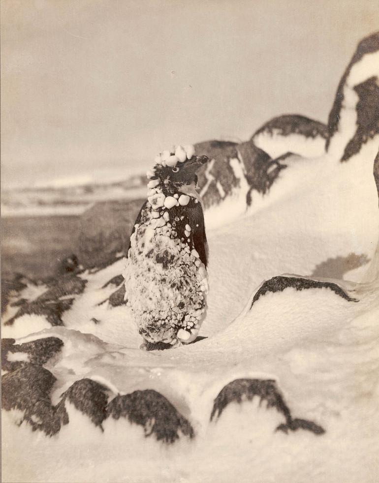 Antarctica_1911_fotograf_Frank_Hurley_54