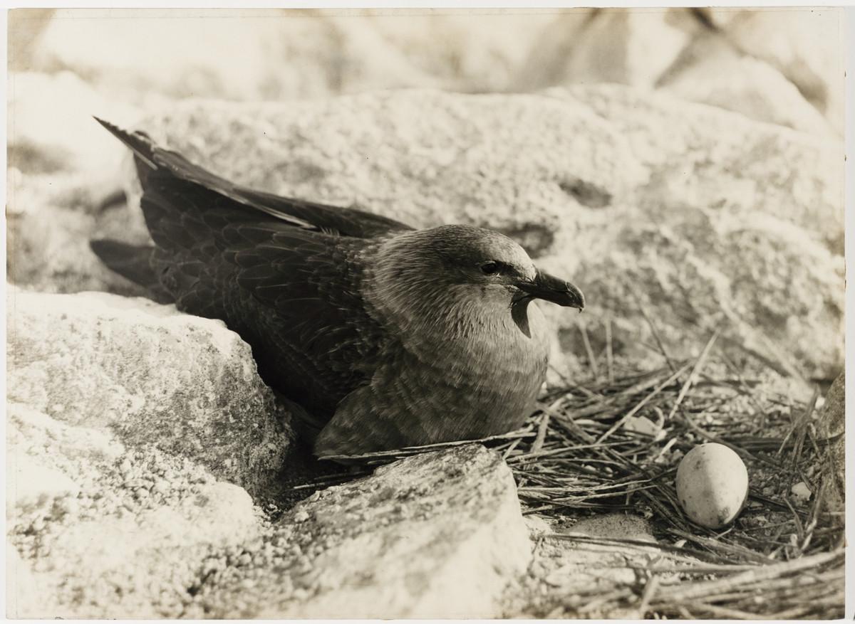 Antarctica_1911_fotograf_Frank_Hurley_6