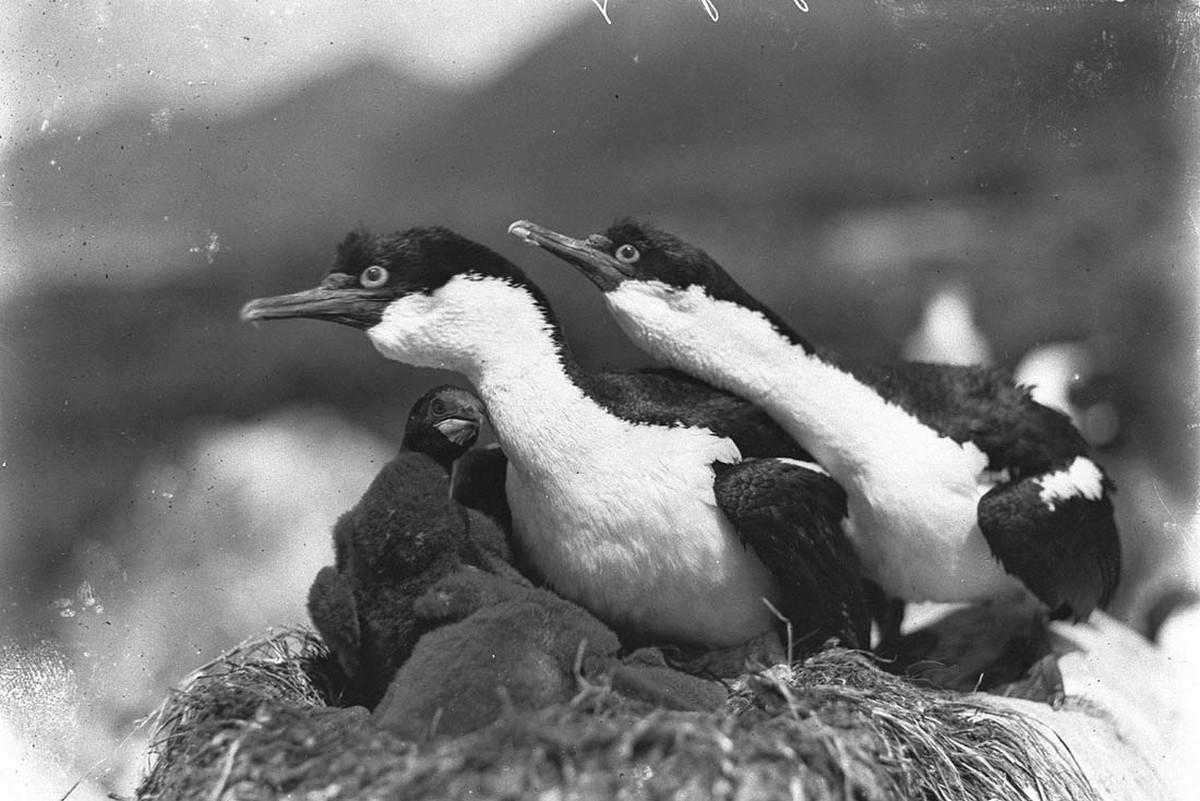 Antarctica_1911_fotograf_Frank_Hurley_60