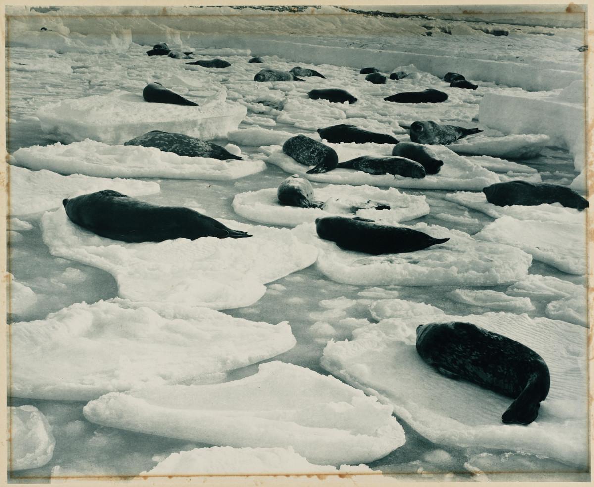 Antarctica_1911_fotograf_Frank_Hurley_65