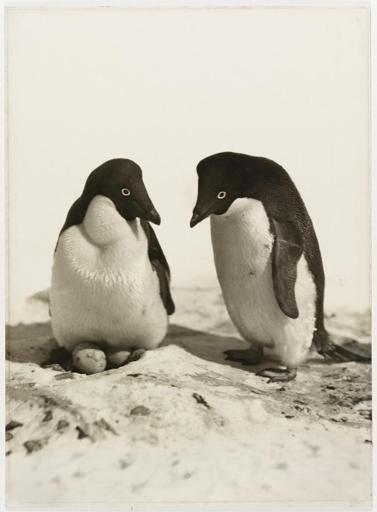 Antarctica_1911_fotograf_Frank_Hurley_7