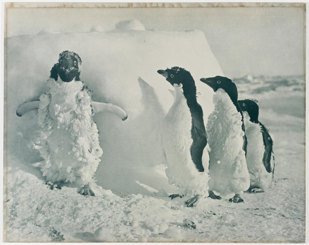 Antarctica_1911_fotograf_Frank_Hurley_8