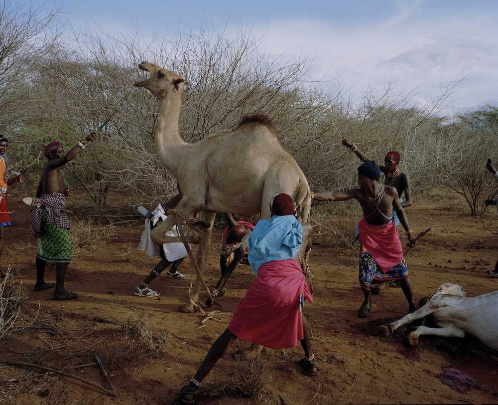 untitled, westgate community conservancy, northern kenya-from th