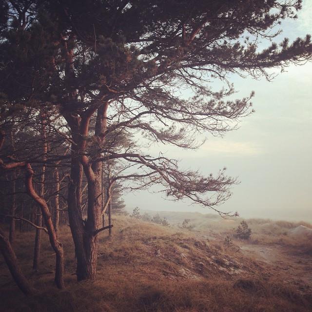 fotograf-Kalle-Gustafsson_2