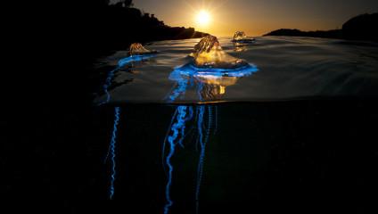 Граница миров: 35 фото в технике «сплит»