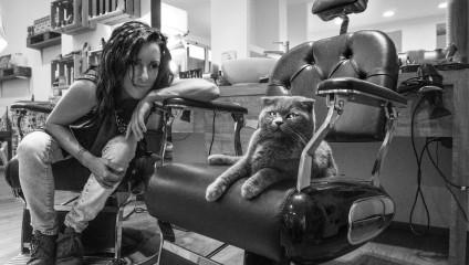 Эти кошки офисные клерки – кошки в фотографиях Марианны Зампьери
