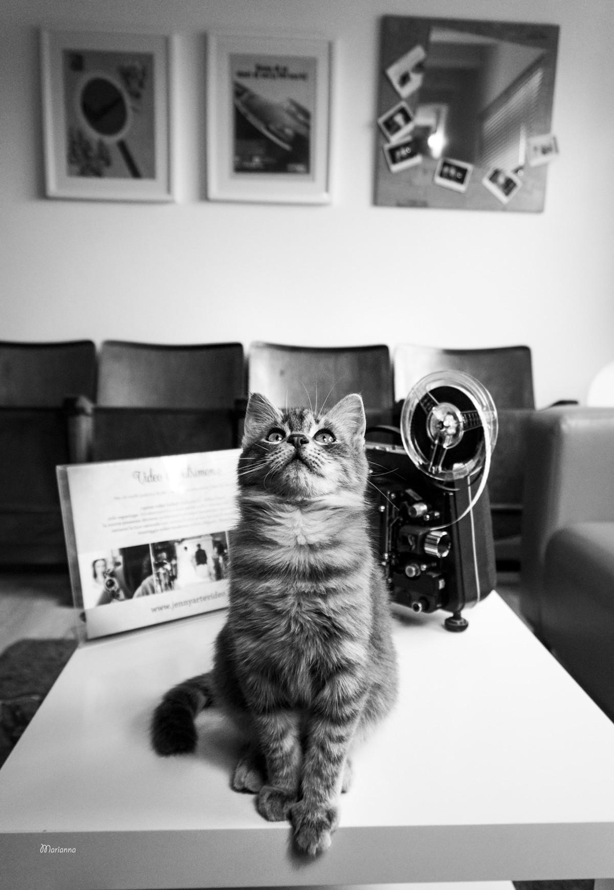 koshki-fotograf-Marianna-Zamperi__4