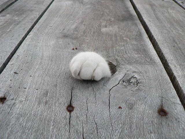 Кошачьи лапки: подборка фото
