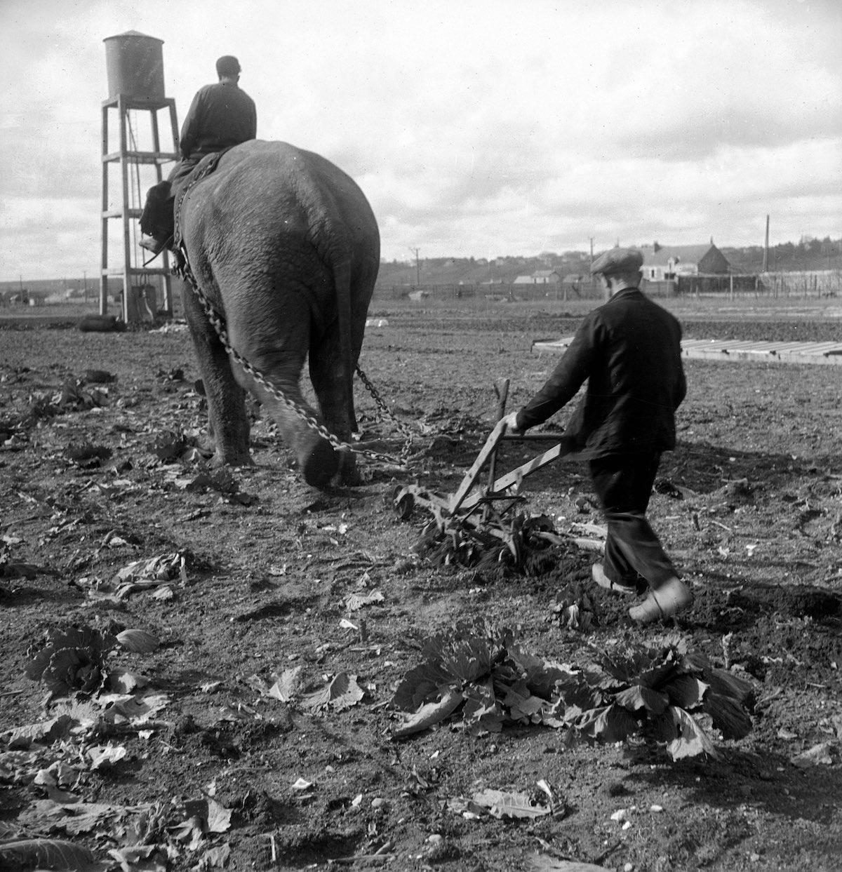 1941 год. Фото: Пьер Джахан/Роджер Виоле/Getty Images