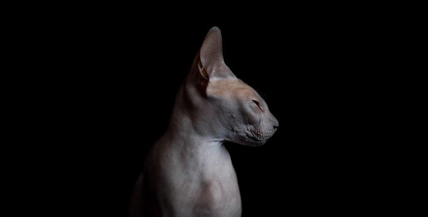Чудеса природы: других таких кошек нет