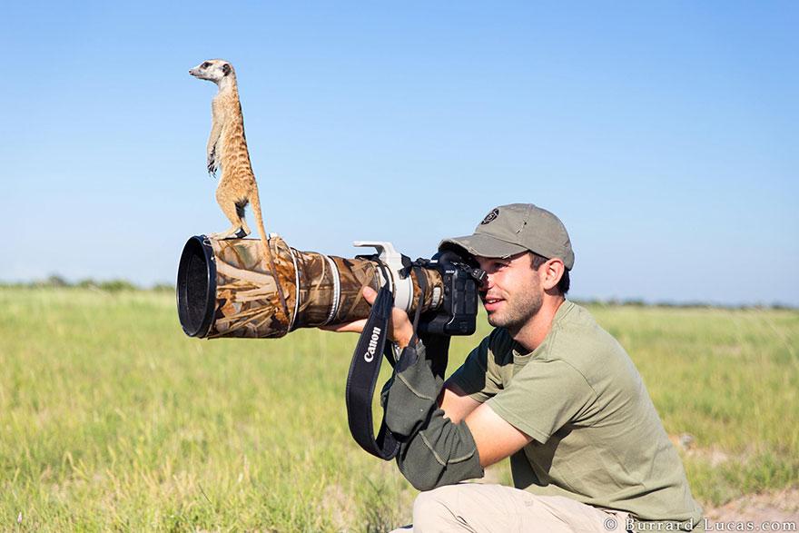 Какие они, будни лучших фотографов дикой природы?