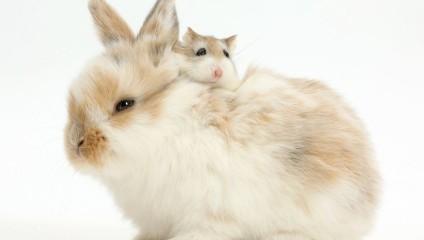 Брат-близнец: что общего у кролика и олененка или у белки с морской свинкой?