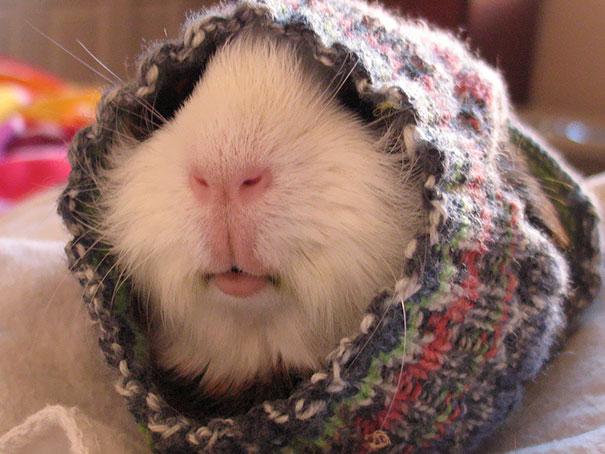 Кролики, улитки и даже петухи – вязаные свитера идут всем