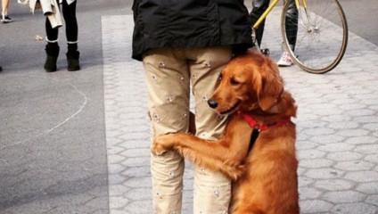 Звезда сети: собака-обнимака из Нью-Йорка
