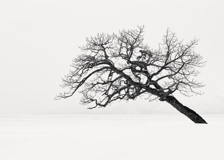 Первое место в категории «Природа: Деревья».