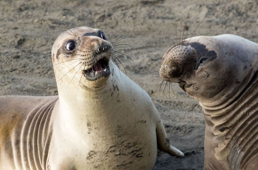 Дикая природа может быть смешной: удачные фото животных