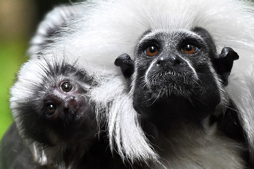 Жизнь в дикой природе: снимки животных из разных уголков мира