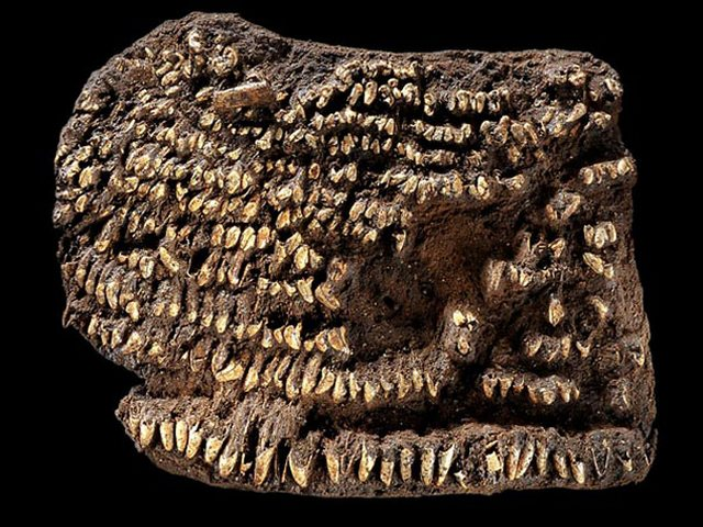 Самый старый кошелёк (4500 лет)