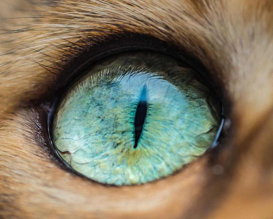 «Cat Eye»: серия макроснимков кошачьих глаз
