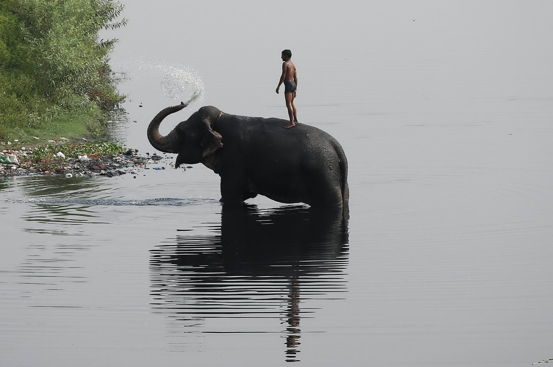 A mahout rides his elephant in the Yamuna river on a hot summer day in New Delhi