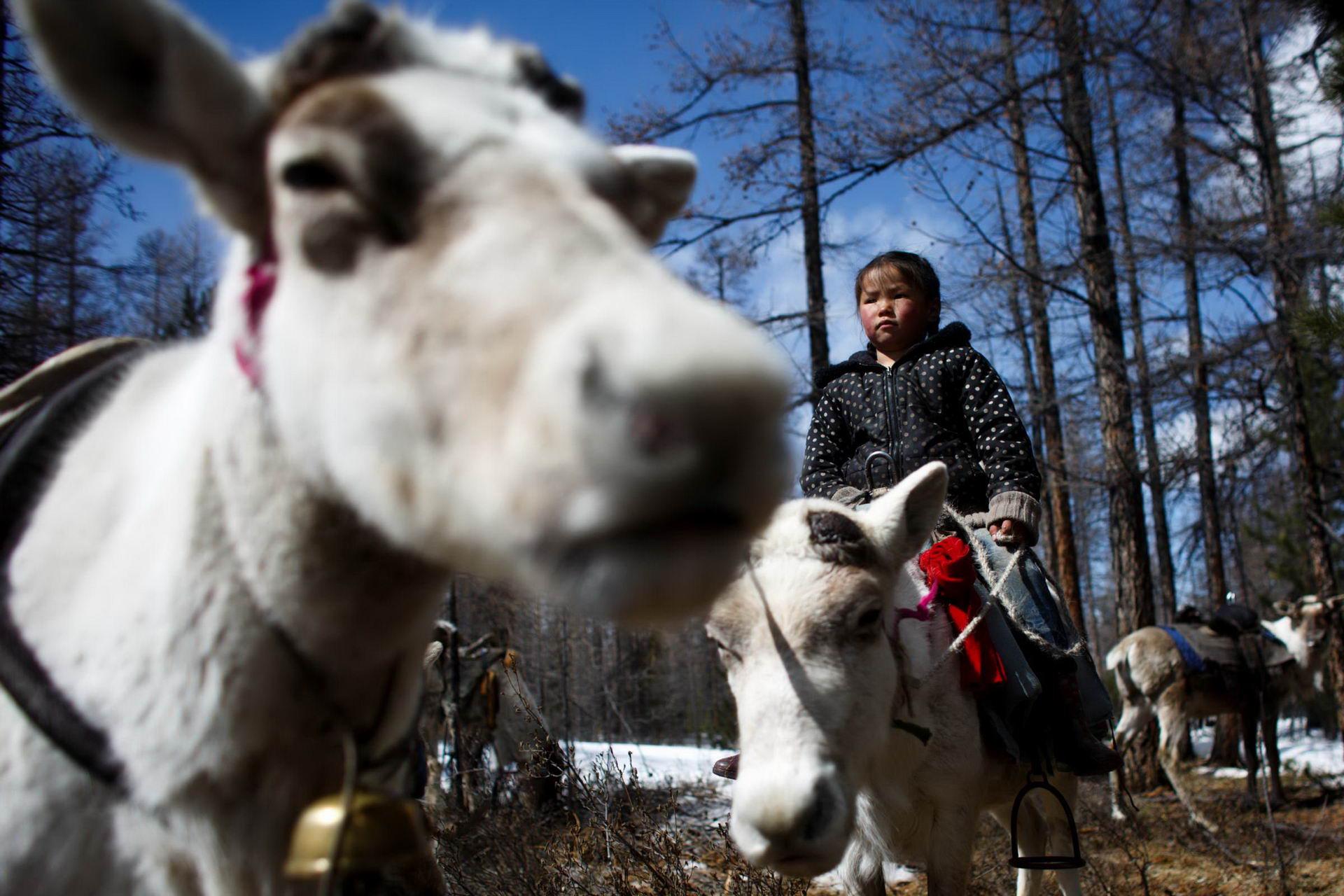 1527770372_mongolia_reindeer_herders_fear_lost_identity_002453_011
