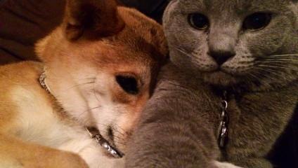 Умилительные и забавные снимки животных
