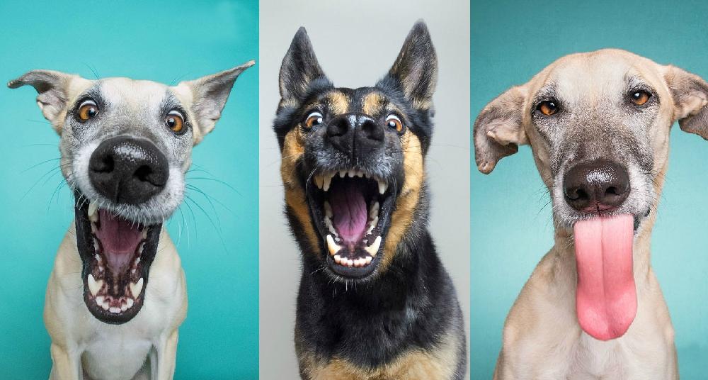 «Мы умеем позировать!»: самые забавные фото собак