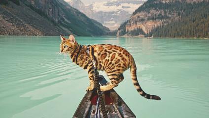 Кошка-путешественница: тот случай, когда можно позавидовать