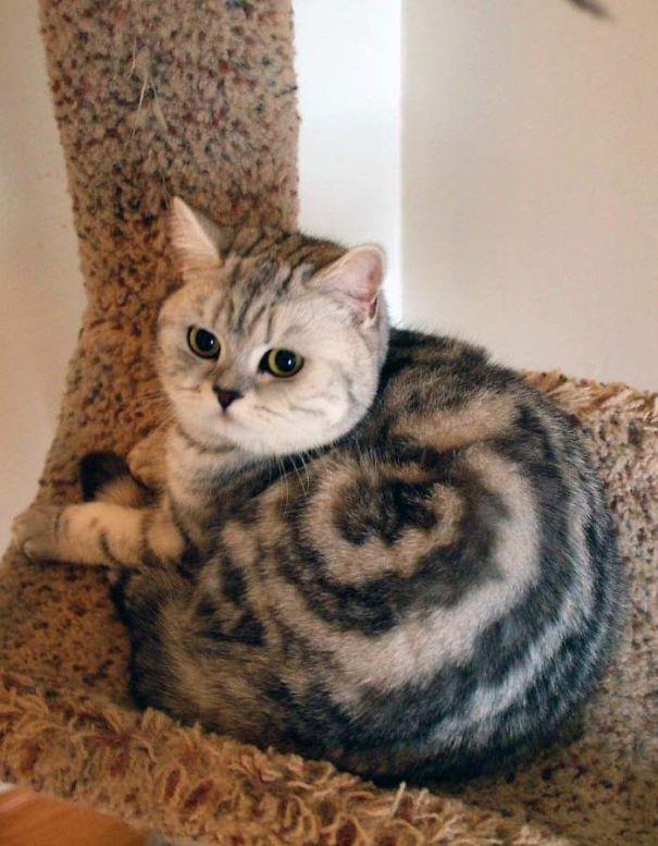 Шутка природы: кошки с самыми смешными и необычными окрасами