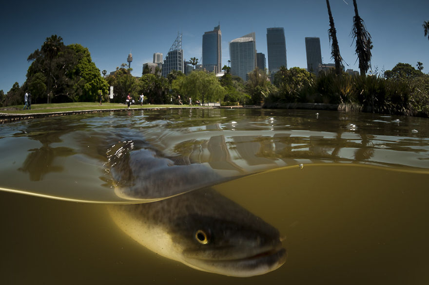 Мир над и под водой в захватывающих снимках Мэтти Смита