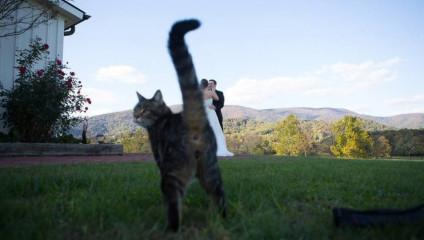 Кошка в кадре: самые забавные фото