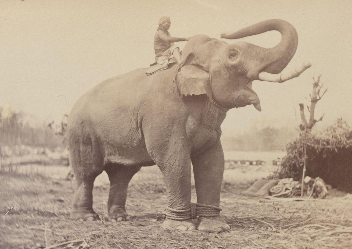Фотографии из Индии XIX века: портреты, пейзажи и архитектура