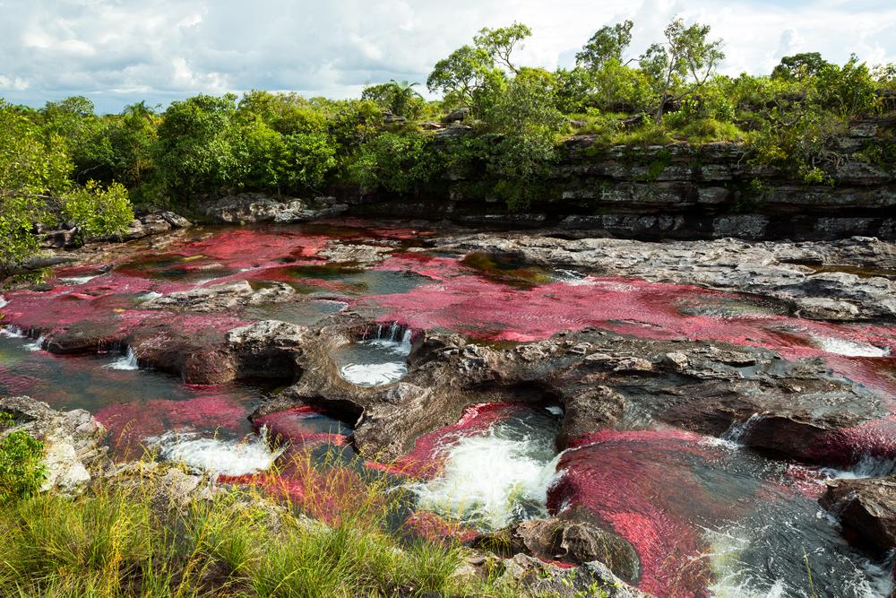 Фото Каньо-Кристалес: самой красивой в мире реки