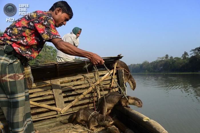 5 животных — помощников рыбаков