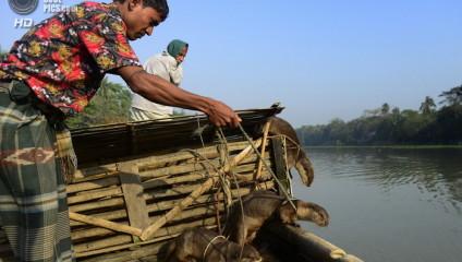 5 животных - помощников рыбаков