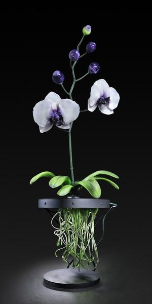Реалистичные цветы-гиганты из стекла
