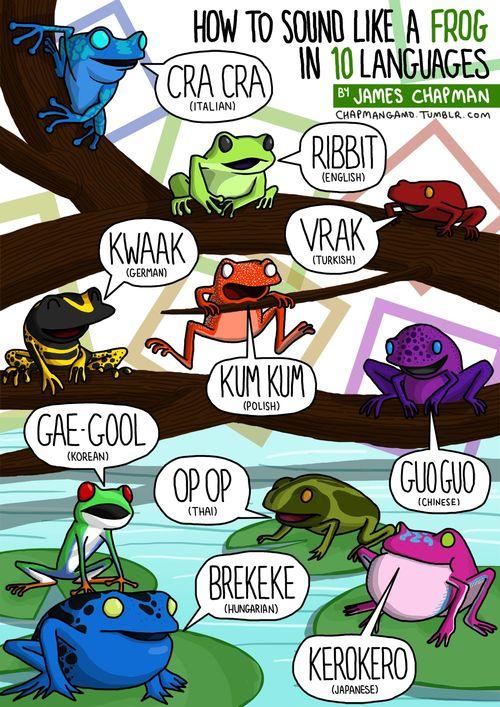 «Разговор» животных на разных языках в картинках