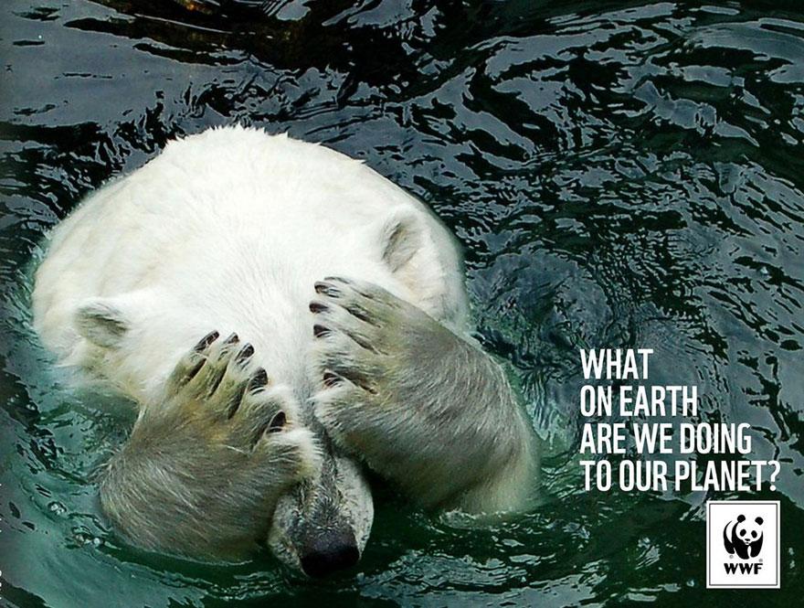 Социальные постеры: спасение животных в руках каждого