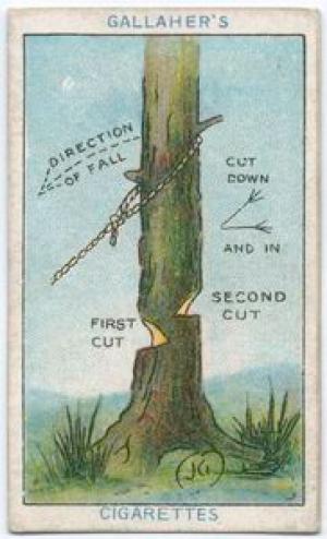 Как спилить дерево «Определившись, с какой стороны вы хотите повалить дерево, сделайте направленный книзу и внутрь надрез, как показано на рисунке. Дойдя примерно до середины, сделайте еще один надрез с другой стороны на несколько дюймов выше и, наконец, потяните дерево вниз при помощи веревок».