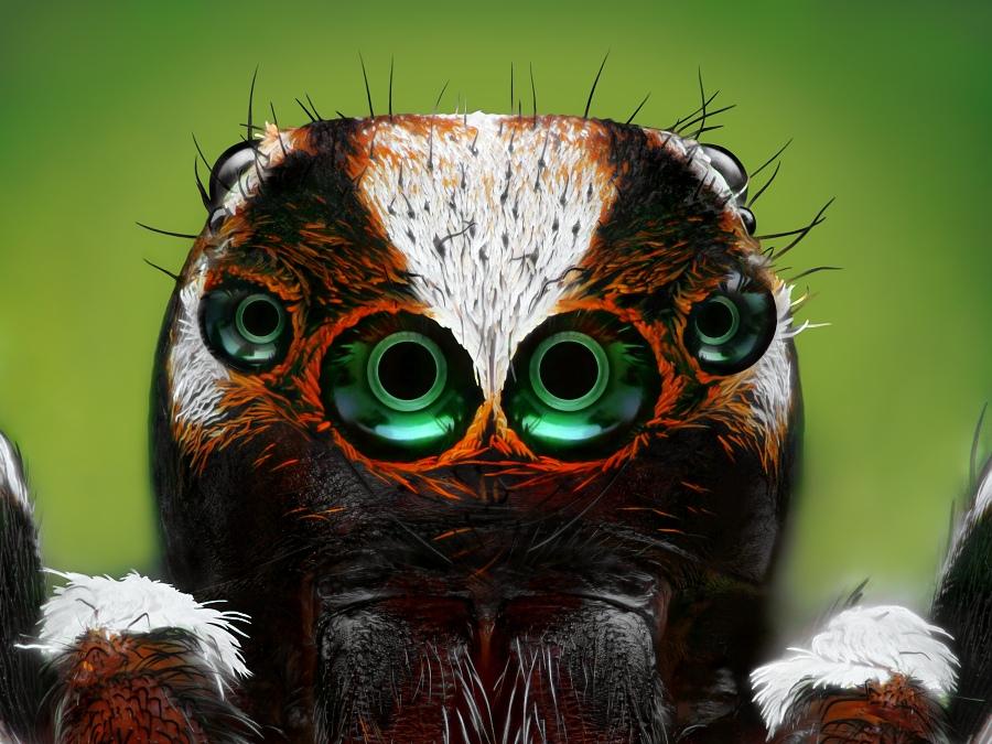 Потрясающие изображения насекомых, для каждого из которых сделано почти 700 фотографий