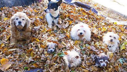 Счастливая собачья старость: американец приютил дома пожилых собак