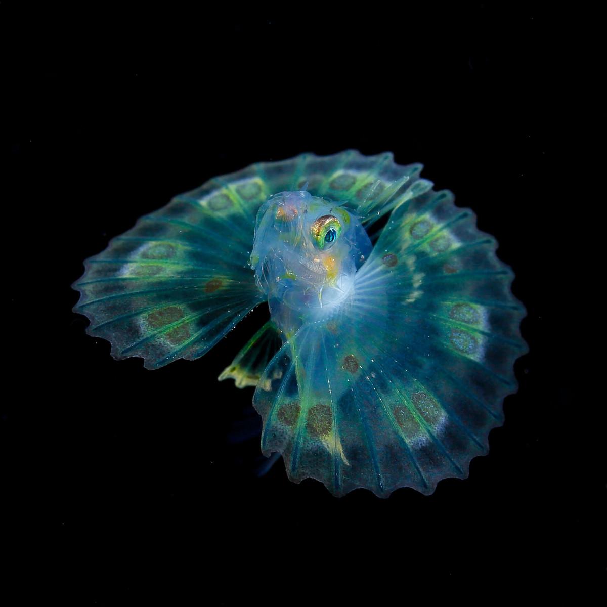 foto_podvodnogo_mira-3