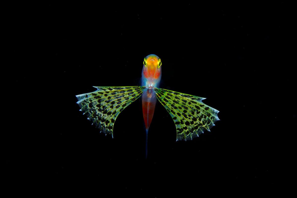 foto_podvodnogo_mira-7